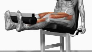 muscles-used-leg-extensions_fe33a54a8b677b5a
